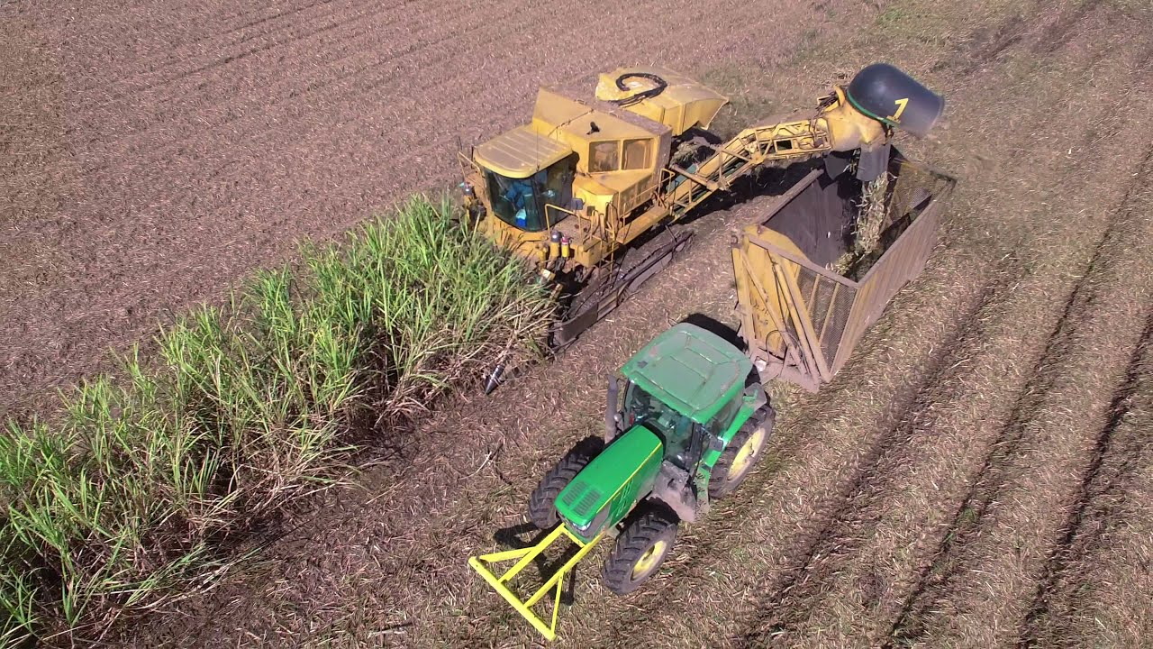 Cameco Sugar Cane Harvester : Cameco row sugarcane harvester k video youtube