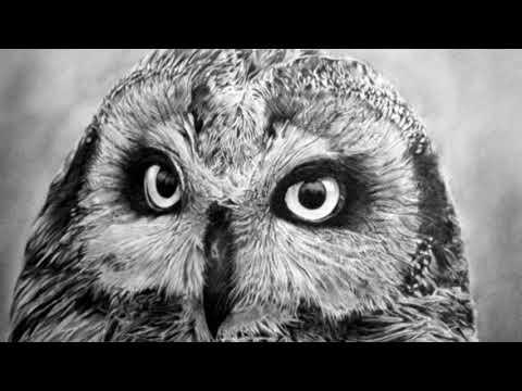 Рисунки простым карандашом профессионального художника не отличить от фотографий