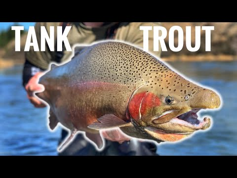 Sight Fishing MONSTER NZ Trout!