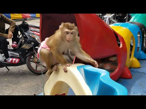 Monkey Baby Nui | Mother let Nui go to the circus