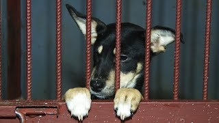 Сюжет ТСН24: в Туле около 800 собак из приюта ожидают хозяев