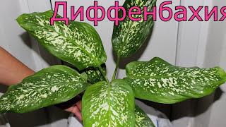 НЕПРИХОТЛИВЫЕ КОМНАТНЫЕ Растения фото и названия