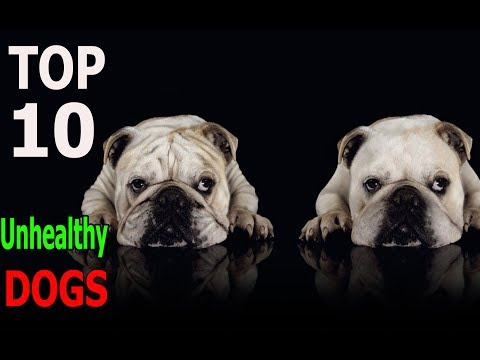 Top 10 Most Unhealthy Dog Breeds | Top 10 animals
