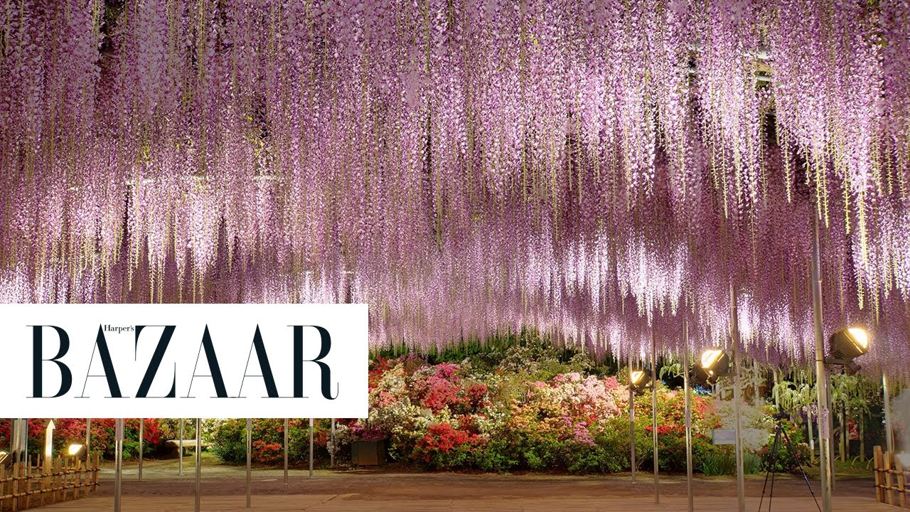 This Wisteria Flower Tunnel In Japan Is The Most Magical Place