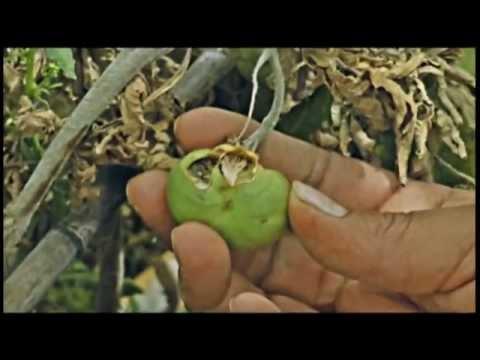 Saberes ancestrales y cambio climatico en Vitichi