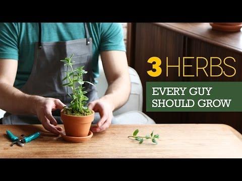 The 3 Herbs Every Man Should Grow on His Windowsill