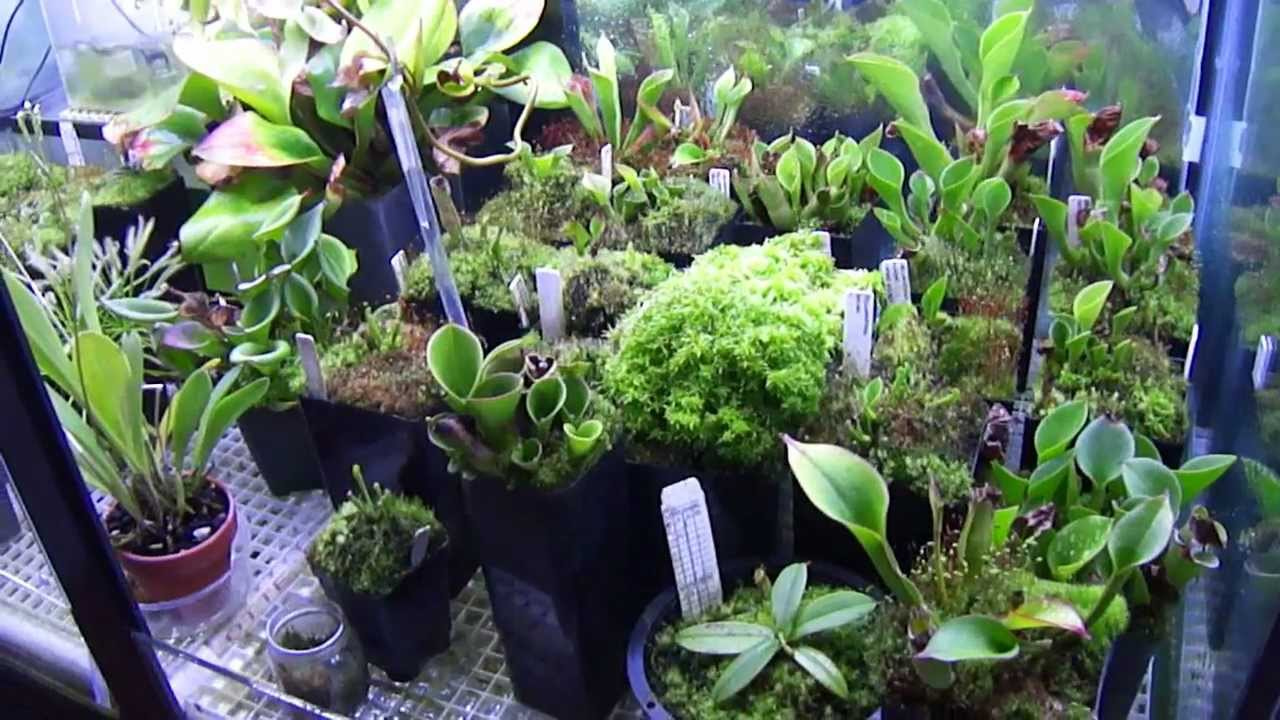 Heliamphora Terrarium Carnivorous Plants 2012 Mp4 Youtube
