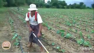 หัวพรวนดิน,หัวพรวนดินใช่ต่อกับเครื่องตัดหญ้า เกษตรไทย ไฮเทค