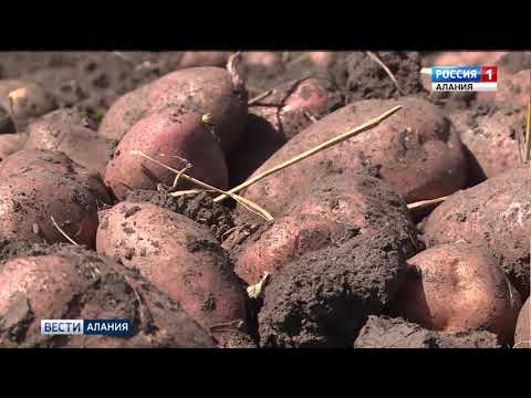 Участники Всероссийского дня картофельного поля подвели итоги двухдневной работы