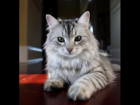 The Best, Most Unusual Exotic Cat Breeds
