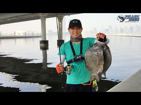 Ultralight Fishing | Monster Black Sea Bream  | Relix Braid Line From Indonesia.