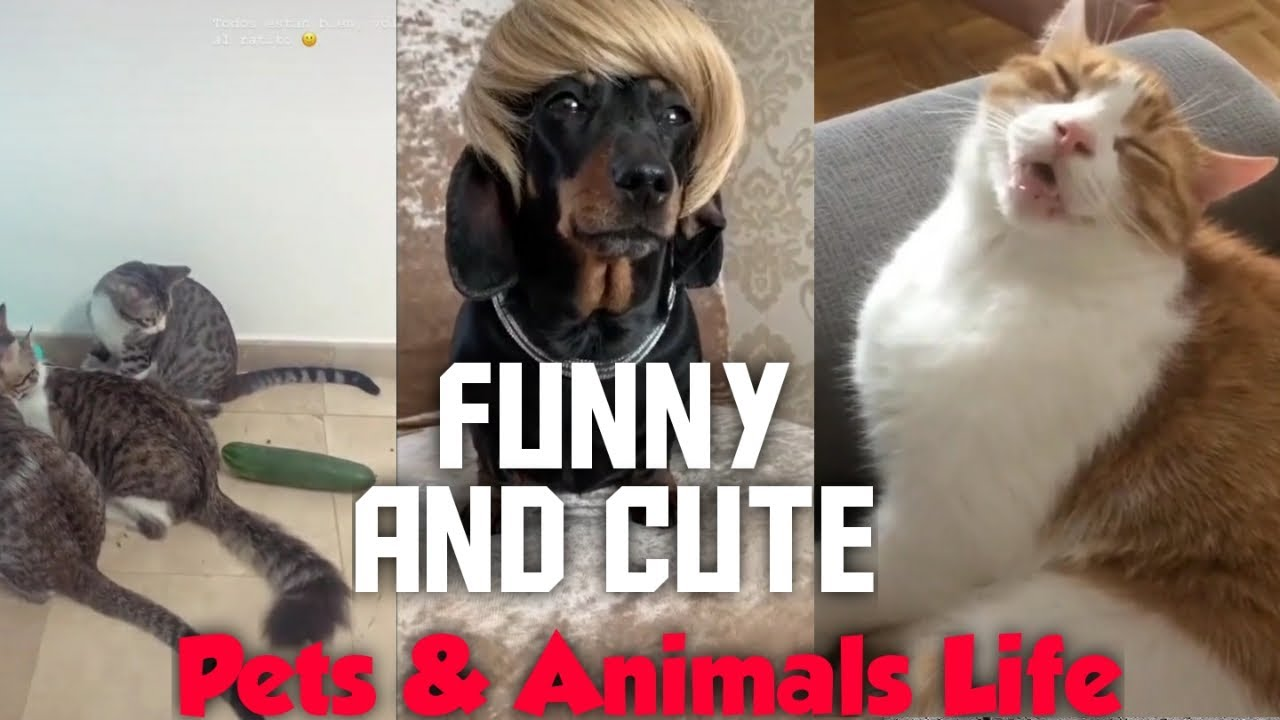 Funny and Cute Pets Compilation 2 - Pets&Animals Life❤