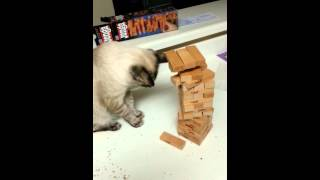 Repeat youtube video Cat actually playing Jenga!
