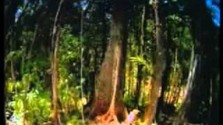 KEAJAIBAN DUNIA SEMUT  (Harun Yahya Bahasa Indonesia) Video