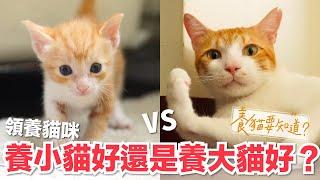 貓一定要從小養領養小貓好還是大貓好養貓要知道EP5
