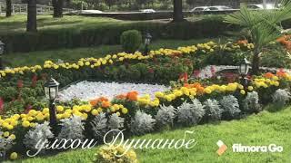 Таджикистан Цветы Душанбе Гулхои Душанбе Осень