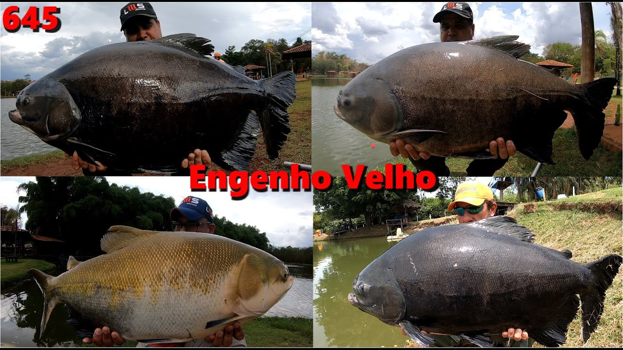 A realidade de um dia muito difícil no Engenho Velho - Programa Fishingtur 645