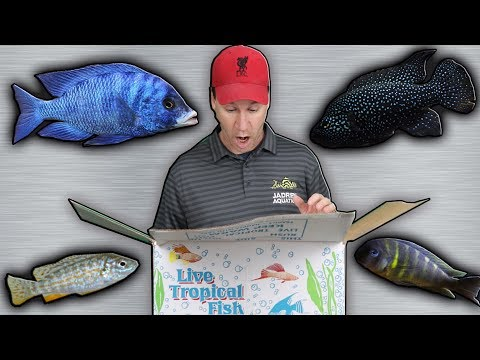RARE African Cichlids FIsh Store Unboxing Captive Breed Tropical Fish