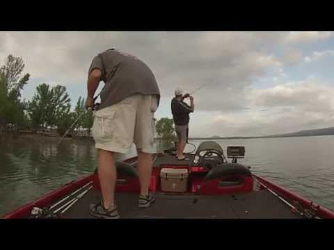 Greers Ferry Lake Bass tourney catches