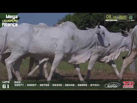 LOTE 061