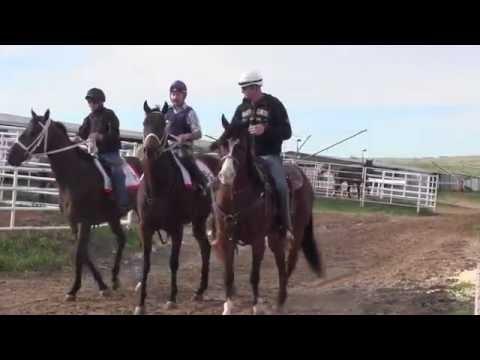 Gates Open - How To Make A Racehorse