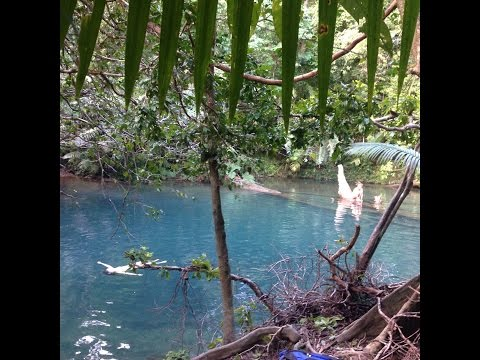 Daintree Rainforest Adventures