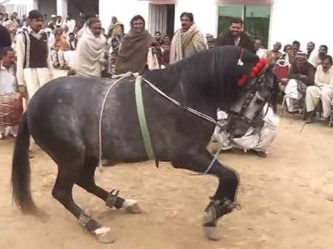 gora intzar dance gujrat pakistan hourse dance