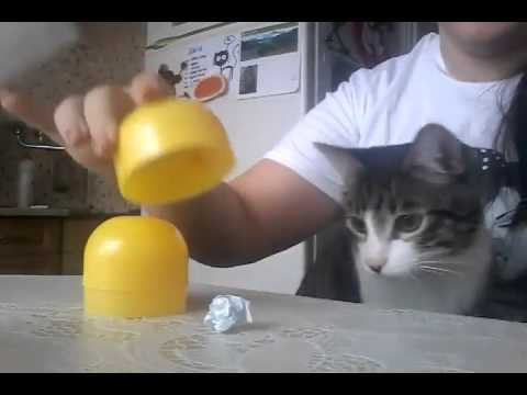 Super Intelligent Cat - Funny Cats- Funny Videos