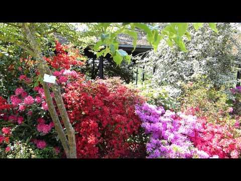 Le parc floral à Vincennes le 04 05 2014