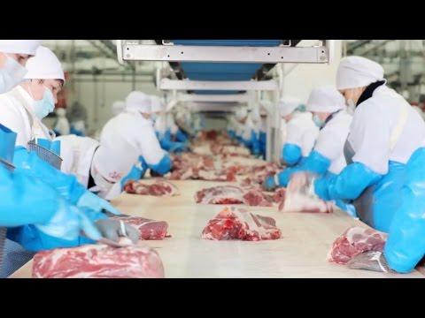 «Белгородская область. Привычные вещи». Производство мяса (28.03.2017)