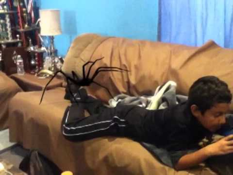 Worlds biggest spider - YouTube