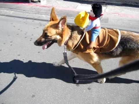 Ride Em Sadie - Halloween - German Shepherd / Horse - YouTube