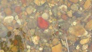『時石の森』 その4 時川の時石(時石の見分け方)