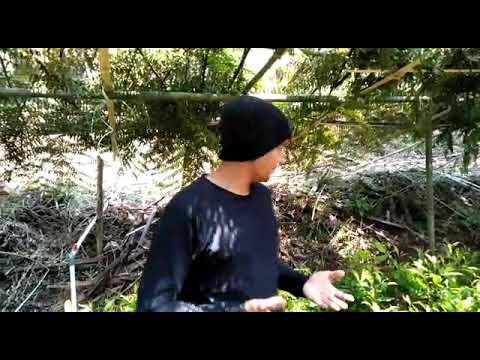 Tips menanam cengkeh bersama Za'enx dari Barmoel