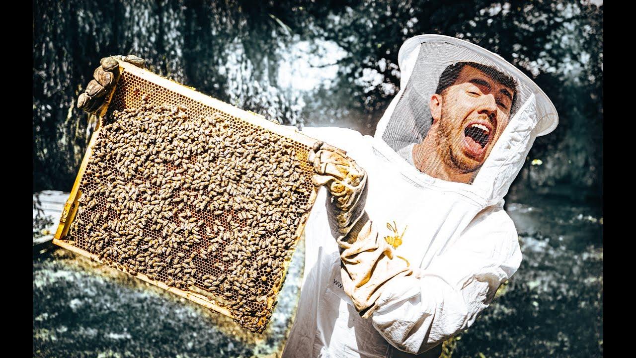 a méhek látványa és szeme)