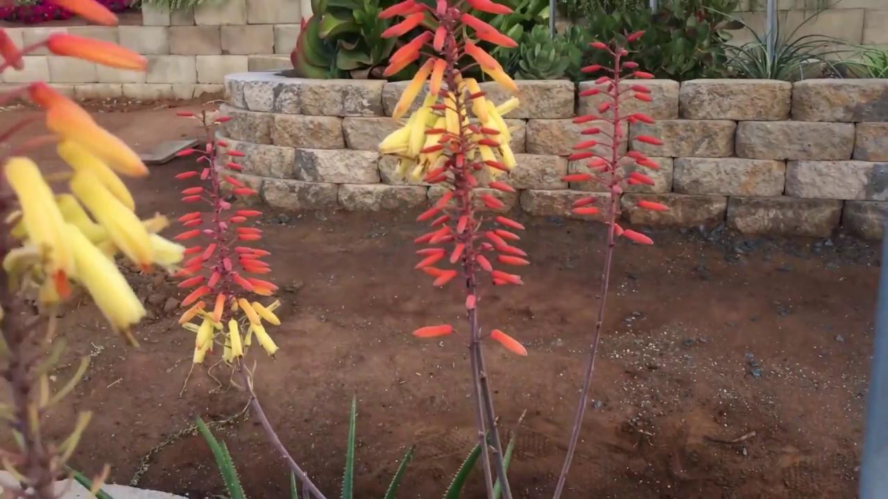 Videos – Altman Plants