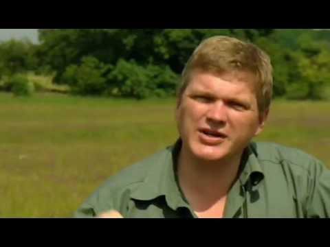 Wild Britain S01E03 Hay Meadow