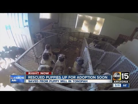 Over 100 puppies rescued from puppy mill
