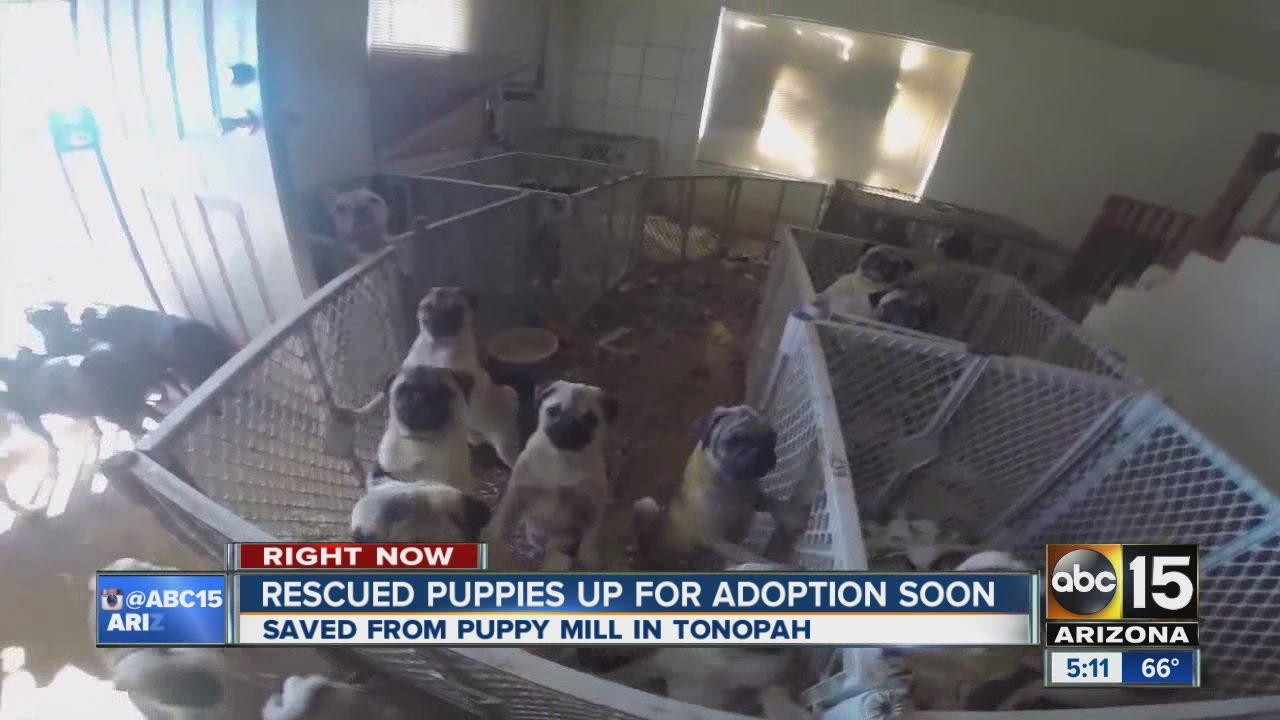 Over 100 Puppies Rescued From Puppy Mill Youtube