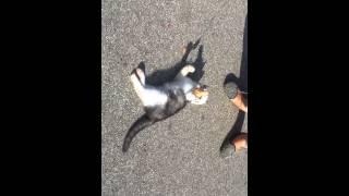 Kačiukas-žaisliukas ieško namučių