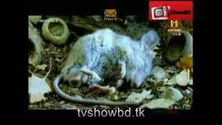 Invisible History tv 18 Bangla Season 1 Part-2