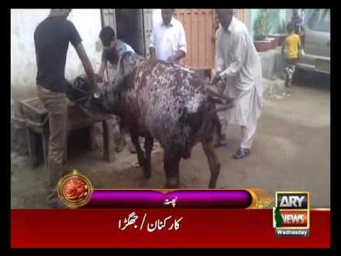 islamic animal cruelty 09142016