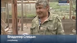 Житель Кыштыма разводит редкие породы голубей