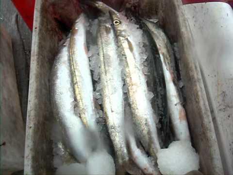 loutsoi(snook) fishing by John Karagiannis(2)