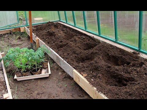 Разбираемся когда и как сажать рассаду помидор: советы и