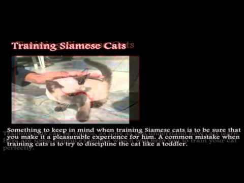 Training Siamese Cats