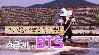 소금계의 BTS  천일염 (The masterpiece…