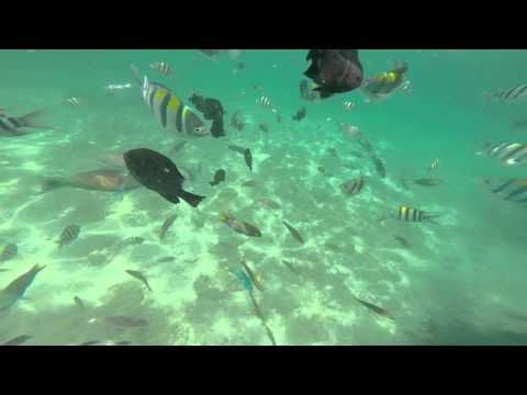 Roilo, the Awesome Fish Sanctuary of Looc, Romblon, Philippines 1