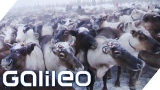 Das Leben der Eisnomaden: Hart und entbehrungsreich | Galileo | ProSieben