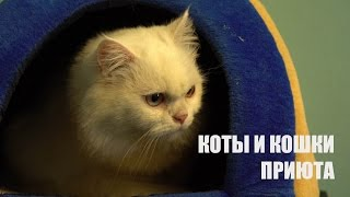 Коты и кошки приюта для бездомных животных. Витебск. Беларусь.